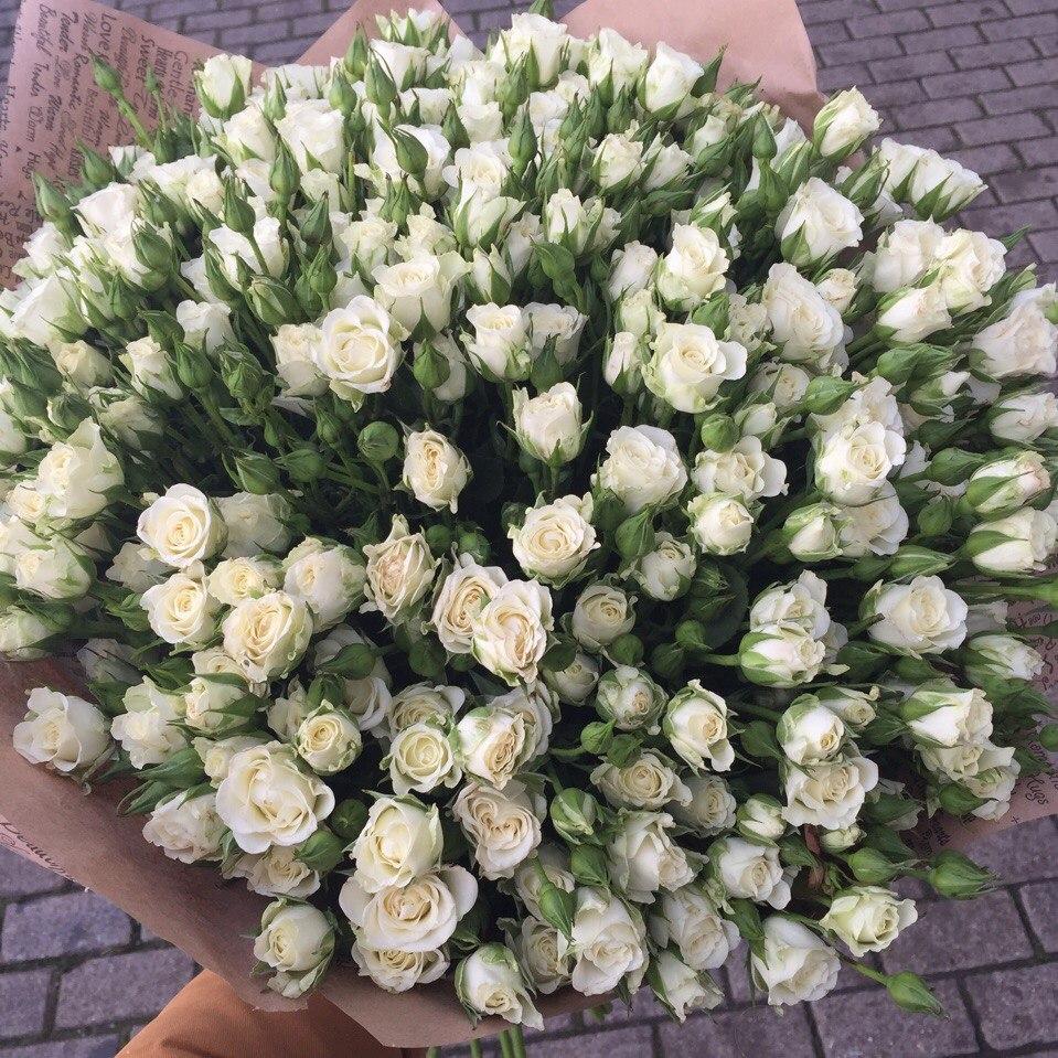 различие кустовые белые цветы фото она так