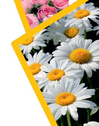 Склад-магазин цветов Ромашково